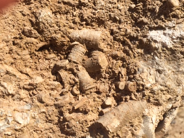 mandale-derbyshire-fossil-quarry-fossil-in-the-quarry-bed-1