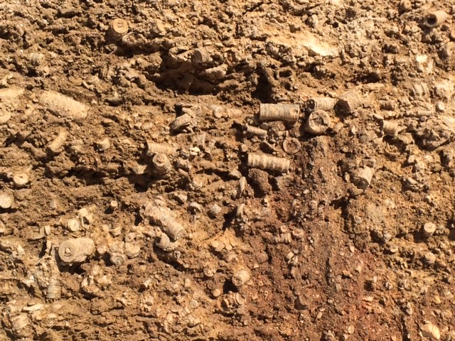 Mandale Derbyshire Fossil Quarry fossil in the quarry bed 3