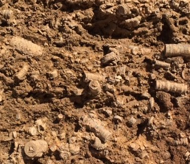 Mandale Derbyshire Fossil Quarry fossil in the quarry bed 5