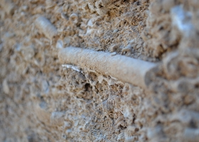 7 close up of large crinoid in quarry face